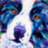 Custom dog portrait australia and international from photos.  Bright, unique.  Borde Collie Artwork.  Online Pet Portraits.