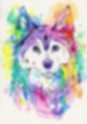 Husky, Siberian Husky, Custom pet portraits, Order pet portraits online, Evei Art, Eve Izzett