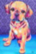 Dog painting, Animal portraits, Pet Portraits Australia, Custom pet portraits, Evei Art, Eve Izzett