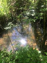 Природа Зинаевки