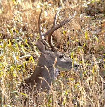 Wildlife is a part of Kerrville Life