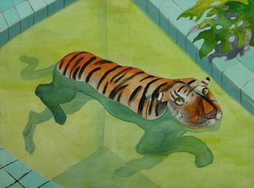 chris_akordalitis_pool_tiger