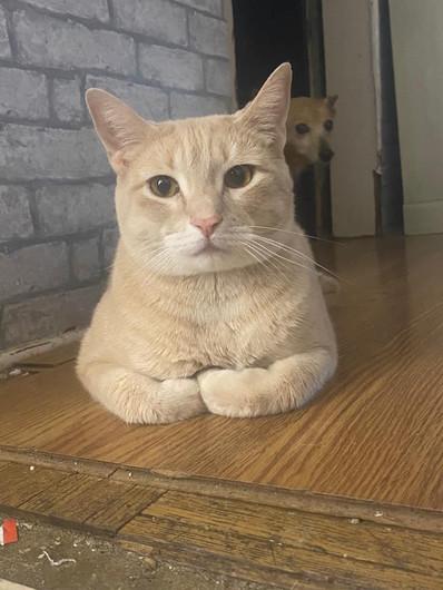 Lilbritcat.jpg