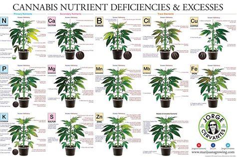 Tablita de carencias y excesos de nutrientes!!!