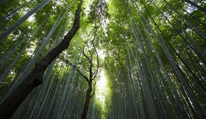 Los árboles se comunican entre sí para ayudarse