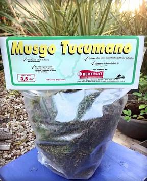 Trajimos Musgo Tucumano para su deleite!