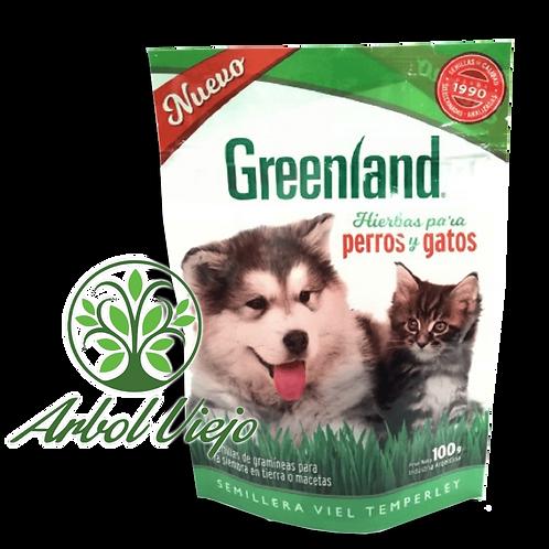 Semillas De Cesped para Perros y Gatos  Greenland 100Grs