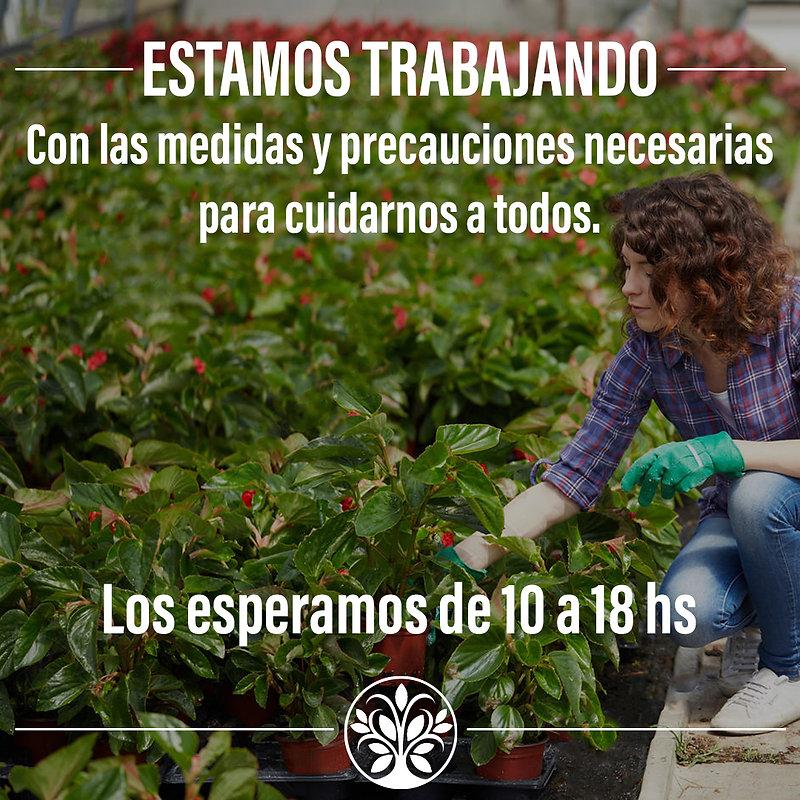 ESTAMOS_TRABAJANDO_ARBOL.jpg