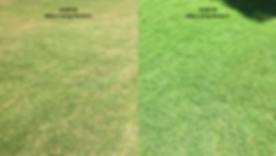Grass_Difference.png