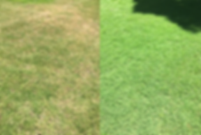 park_grass_difference.png