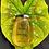 Thumbnail: Indihive Acacia Honey (Small)