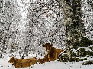 7 Tips to prep your herd for winter