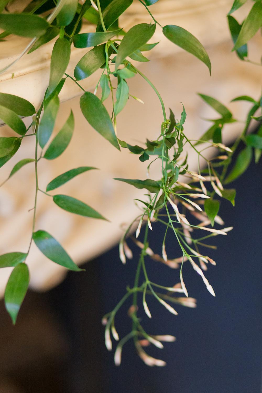 Wedding flowers, fragrant Jasmine