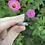 Thumbnail: Flowers Among Us