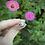 Thumbnail: Lucky Ladybug Ring
