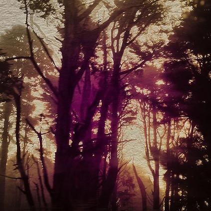 #darkcalifornia#redwoods#thecryptids.jpg