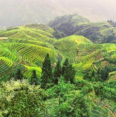 #china#liriver#ricefields.jpg