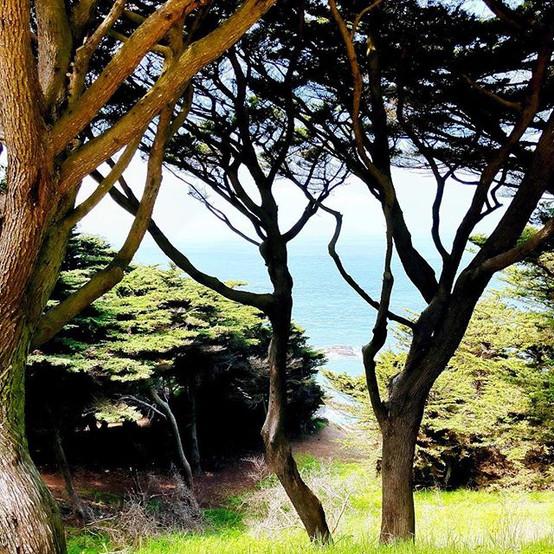 #pacificcoast#californiadreams.jpg