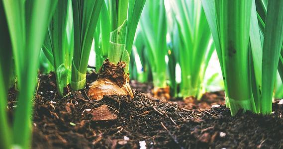 Produits de la terre - BeNow Produits Naturels