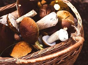 champignons BeNow Suisse
