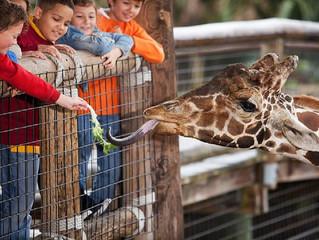 גן החיות פיינטון Purple מקדמת את יכולות השיווק ואת חווית מבקרי שמורות הטבע בבריטניה