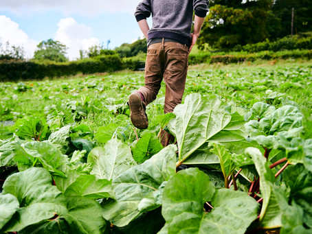 The UK Government want younger farmers in a bid to protect the environment