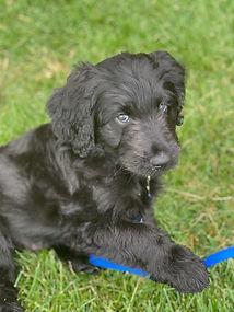 katherine puppy.jpg