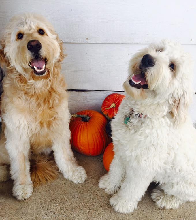 Maizy & Murphy