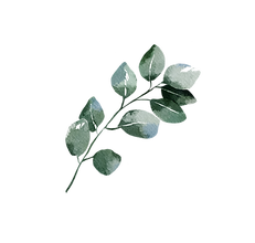 Element-26.png