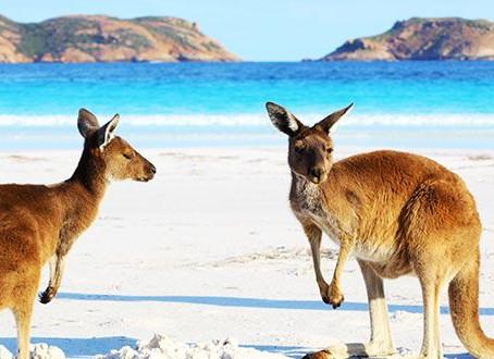 Visita Australia, un continente a descubrir