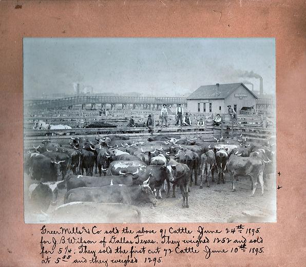 Stockyards1895.jpg