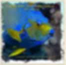 Caribbean Layflat Cover.jpg