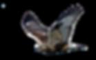 hawk-2604029_1280.png