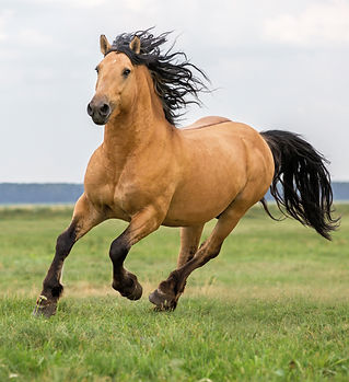 Beautiful bay horse..jpg