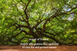 Angle Oak Tree in Johns Island, South Carolina_edited