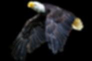 animal-3065387_1920.png