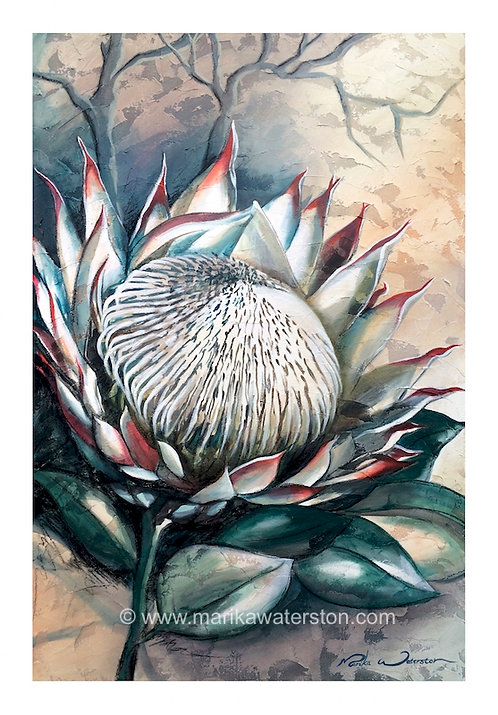 Creation cries out - Protea
