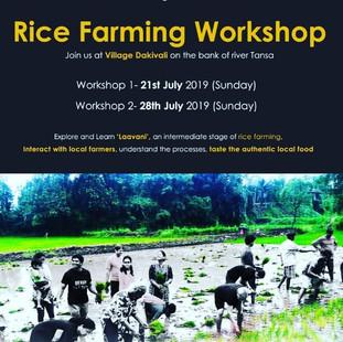 Community Rice Farming Workshop organized by unTAG.