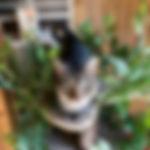 Animal Sanctuary 2019-4.jpg
