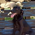 11-6 Animal Sanctuary_Raven.jpg