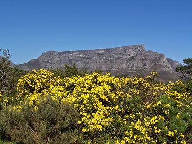Sophie Lardy Cape Town