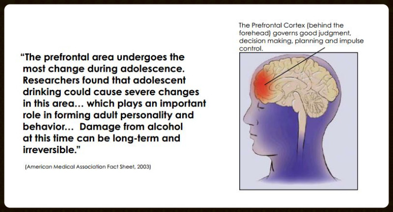 prefrontal cortex brain of teen_edited.JPG