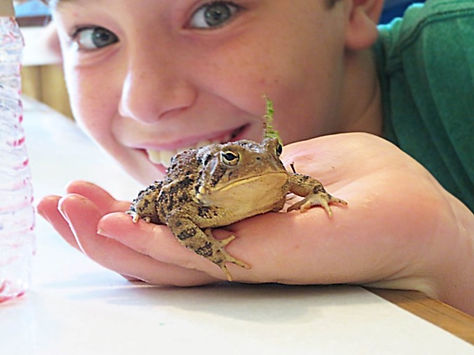boy frog.jpg