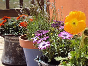 FB-FlowerOnDeck.JPG