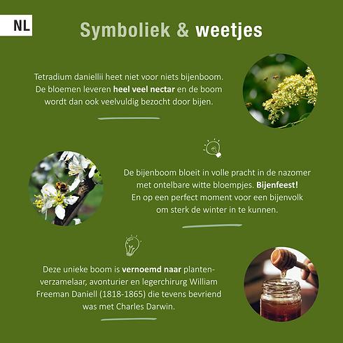 Bijenboom_Symboliek.png