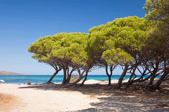 Parasoldennen op het strand
