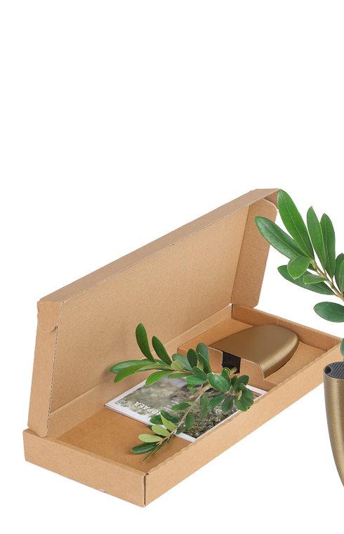 Olea-Europaea-olijf-olijven-olive-Brieve