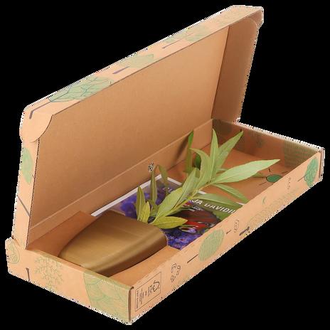 Butterfly bush in letterbox