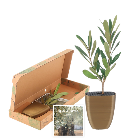 Olive-package-flyer2.png