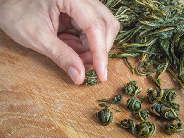 Rolling tea leaf balls before fermentation